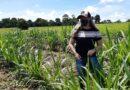 Centrer-Emater incentiva produção do capiaçu e disponibiliza matriz ao pequeno produtor rural