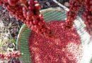 Café de Rondônia recebe nova certificação de qualidade