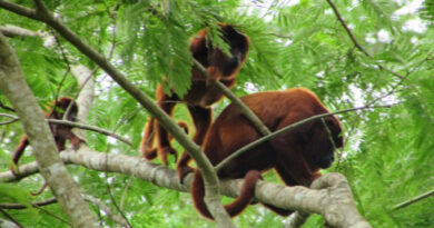 Belezas da Natureza: imagens da fauna nos arredores de Ji-Paraná