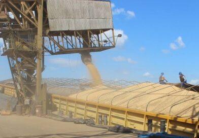 Rondônia é o terceiro maior produtor de grãos da Região Norte